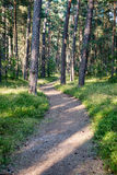 Trail in the woods near sea in the dunes. Forest Stock Image
