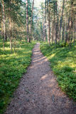 Trail in the woods near sea in the dunes. Forest Royalty Free Stock Photo