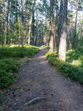 Trail in the woods near sea in the dunes. Forest Royalty Free Stock Image