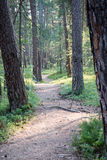 Trail in the woods near sea in the dunes. Forest Royalty Free Stock Images