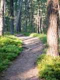 Trail in the woods near sea in the dunes Royalty Free Stock Image