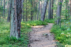 Trail in the woods near sea in the dunes Stock Image