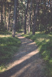 Trail in the woods near sea in the dunes Stock Photo