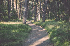 Trail in the woods near sea in the dunes Stock Photography