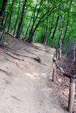 Trail in the woods on a small slope with wooden handrails for pedestrians. For your design stock photo