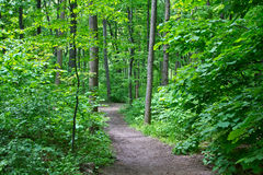 Trail in the woods Royalty Free Stock Photos
