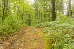Trail Woods Summer Stock Photography