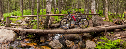 Trail in woods with touring bike Stock Photos