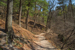 Trail through the woods. Royalty Free Stock Photos