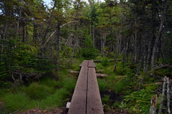 Trail in woods. Walkway into woods in Saint John, New Brunswick canada Royalty Free Stock Photos