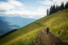 Trailbuilder идет вне на горную тропу для того чтобы построить больше Стоковые Изображения