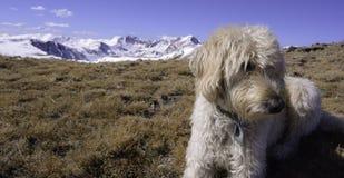 Traildog auf Holz-Berg Stockfotos