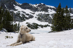 TrailDog in Snow at Missouri Lakes Royalty Free Stock Images