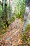 Trailen i bergen Arkivbild