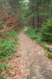 Trailen i bergen Arkivfoto