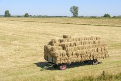 Trailer full of straw bales in the field Royalty Free Stock Image
