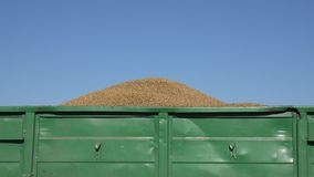 Trailer full of thresh grain at harvest on sky background. 4K. Zoom in of tratctor trailer full of thresh cereal grain at harvest time on blue sky background. 4K stock video footage