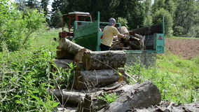Trailer worker logs. Worker working in the forest on a sunny day on a trailer pile large sawn logs stock video footage