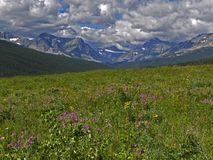 Trailhead to Triple Divide Pass. This image shows the flowered meadow at the trailhead to Triple Divide Pass in Galcier National Park Royalty Free Stock Photos