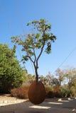 Trailing orange tree Royalty Free Stock Photos