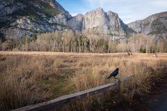 Traill di camminata di Yosemite Immagine Stock Libera da Diritti