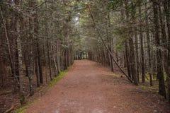 trails Royaltyfria Foton