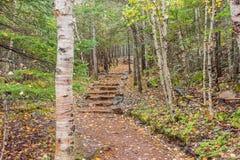 trails Royaltyfri Bild