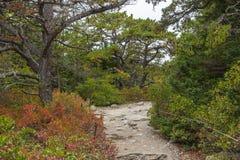 trails Royaltyfri Fotografi