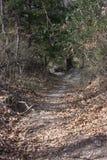 trails Fotografering för Bildbyråer