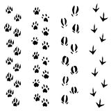 Trails of animals steps isolated on white backgrou Stock Photography