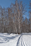 Trails in a birch grove near the city Kamensk-Uralsky. Russia Stock Photography