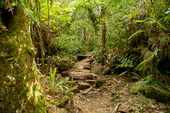 Trails in reunion Stock Photos