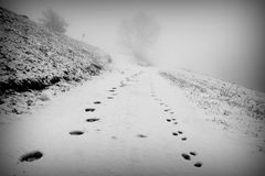 Trails in the snow Royalty Free Stock Photos