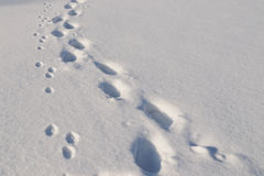 Trails in snow Royalty Free Stock Images