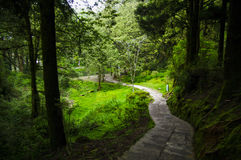 Trails to go out forest in Taiwan mountain - Alishan. Trails to go out forest in Taiwan famous mountain - Alishan Royalty Free Stock Photo