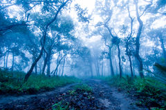 Trails in tropical forests Stock Photo