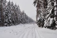 Trails in winter forest Stock Image