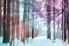 Trails in the winter woods Royalty Free Stock Images