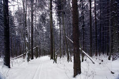 Trails in the winter woods Stock Photos