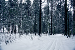 Trails in the winter woods Royalty Free Stock Photography