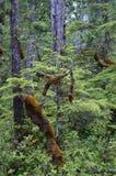 Trailside -- Cabo Scott Trail Imágenes de archivo libres de regalías