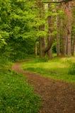 trailspolning Royaltyfri Foto