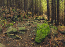 Trailway in the forest Stock Photography