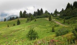 Trailway im Gebirgswald Lizenzfreie Stockfotos