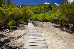 Trailway through the mangrove forest Stock Images