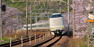 Train in cherry blossom. Wakayama, Japan : Kishuji Rapid train going around the bend surrounded by branches of cherry blossom trees in bloom. Train is a 289 stock image