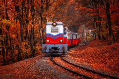 Free Train Coming In The Autumn Forest Stock Images - 162319114
