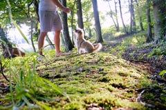 Train de chien par un homme dans la région boisée au coucher du soleil Image stock