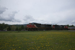 Train Engine. Canada Northern Train Engine and freight cars on railroad tracks with yellow dandelion covered green grass lawn in foreground in British Columbia Stock Photos