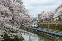 Train and full bloom Cherry-blossom trees along Kajo castle moat Royalty Free Stock Images